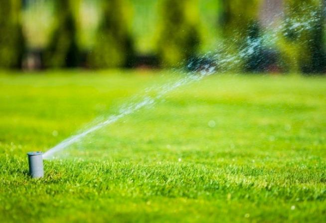 come risparmiare acqua in il giardino